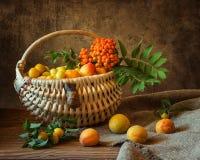 О улитке и абрикосах Стоковое Фото