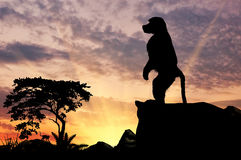 Павиан обезьяны силуэта Стоковые Фото
