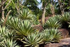 Павильон кактуса в саде Nong Nooch тропическом ботаническом, Паттайя Стоковые Изображения