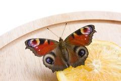 павлин бабочки Стоковое Изображение