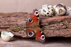 павлин европейца бабочки Стоковое Изображение