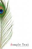 павлин пера глаза детали Стоковые Фотографии RF
