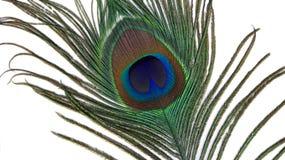 павлин пера глаза Стоковые Фото