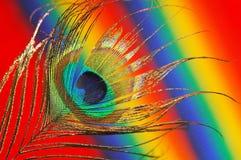 павлин пера предпосылки шикарный Стоковая Фотография RF