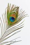 павлин пера стоковые фото