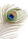 павлин пера Стоковое Фото