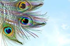 Павлин оперяется в предпосылке неба с космосом экземпляра текста Стоковое Изображение RF