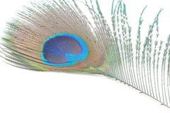 павлин пер зеленый Стоковая Фотография RF