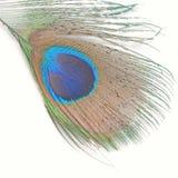 павлин пер зеленый Стоковое Фото
