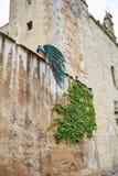 Павлин Caceres в старой стене города на эстремадуре Стоковая Фотография RF