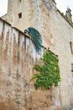 Павлин Caceres в старой стене города на эстремадуре Стоковая Фотография