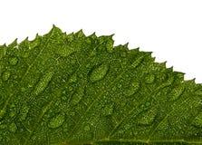 падает вода листьев hornbeam стоковое изображение