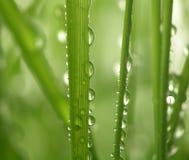 падает зеленый цвет травы Стоковые Фотографии RF