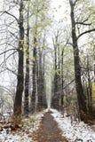 падает первый снежок Стоковое Фото