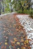 падает первый снежок Стоковые Изображения