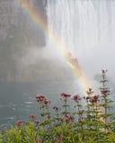 падает радуга niagara Стоковая Фотография RF