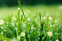 падает свежая вода зеленого цвета травы Стоковое Изображение RF