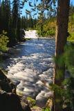 падает lewis yellowstone Стоковые Фото