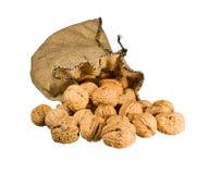 падать мешковины изолировал много вне sack грецкие орехи Стоковая Фотография RF