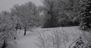 Падать снежинок зимы видеоматериал