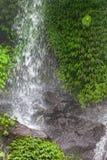 падают джунгли Стоковое Фото