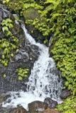 падают джунгли Стоковые Фото