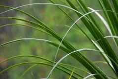 падая дождь листьев fronds Стоковое Фото