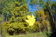 Падая желтый кленовый лист Стоковое фото RF