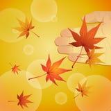 падая клен листьев Стоковая Фотография