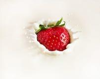 падая клубника молока Стоковое фото RF
