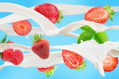 Падая клубники с молоком брызгают на голубой предпосылке Стоковое Фото