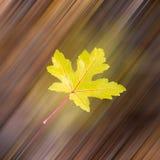 Падая листья в осени Стоковое Фото