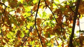 Падая листья осени близкие вверх видеоматериал
