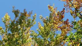 Падая листья осени в ветре акции видеоматериалы
