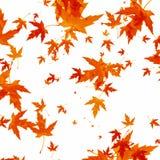 Падая листья осени на белой предпосылке Стоковое Изображение