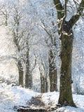 падая снежок Стоковая Фотография RF