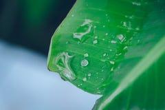Падение воды на зеленой предпосылке лист банана Стоковое Фото