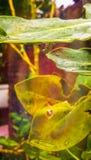 Падение воды на лист стоковые изображения rf