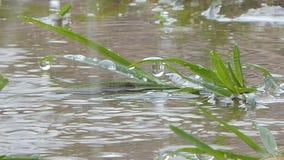 Падение воды на траве в дождливом дне видеоматериал