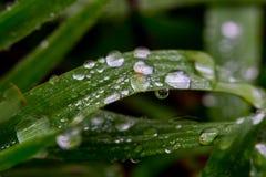 Падение воды на траве 3 стоковые фотографии rf