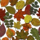 Падение выходит безшовная предпосылка картины Листва лист осени красочная иллюстрация штока
