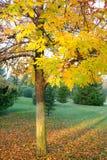 Падение выходит деревья и сад Стоковое Изображение