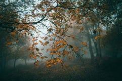 Падение выходит на путь против красивого атмосферического туманного полесья в лес подобной редактируемая деканом к фильтру Instag Стоковые Фотографии RF