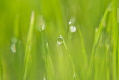 Падение дождя на зеленой траве Стоковая Фотография RF