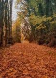 падение золотистое leaves2 Стоковая Фотография