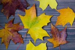падение Канады осени выходит клен Стоковые Фотографии RF