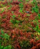 Падение красит деталь природы Стоковые Фото