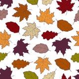 Падение 2 листьев безшовное Стоковые Изображения RF