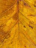 Падение листьев вала текстуры Стоковое Фото