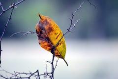 Падение листьев на завод стоковые изображения rf